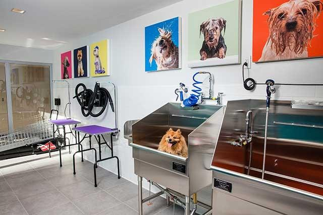 Pet Friendly, Phoenix, AZ